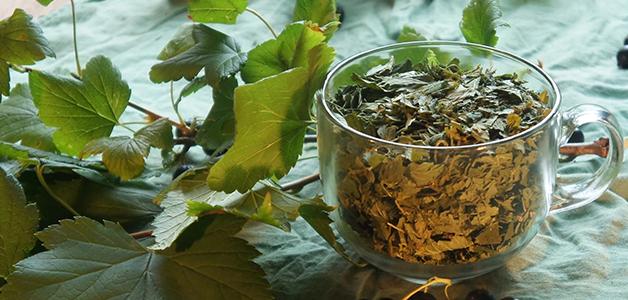 Чай Из Листьев Смородины Польза И Вред - основные характеристики