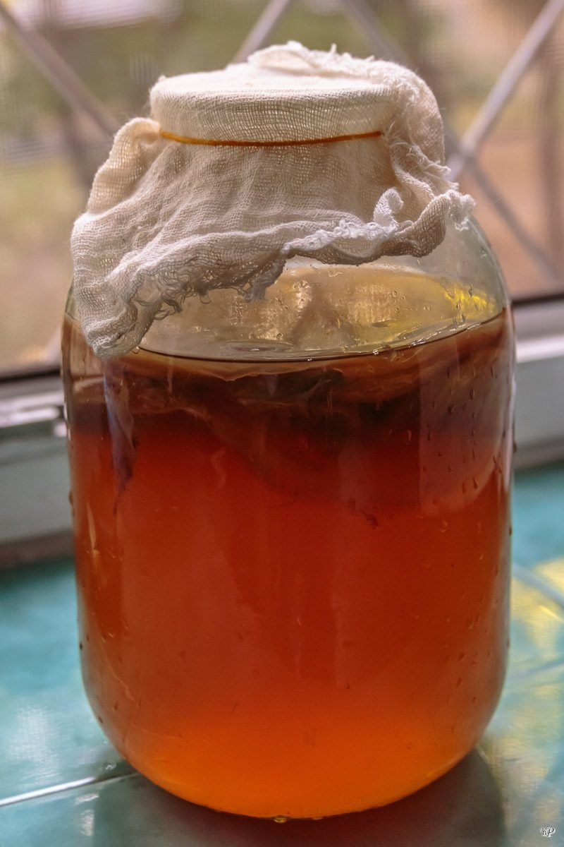 Можно Ли Чайный Гриб Хранить В Холодильнике - подробнее о чае