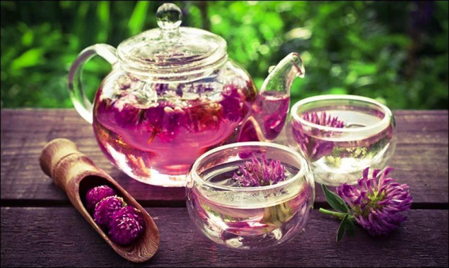 Чай Из Клевера Лугового Польза И Вред - описание и основные характеристики