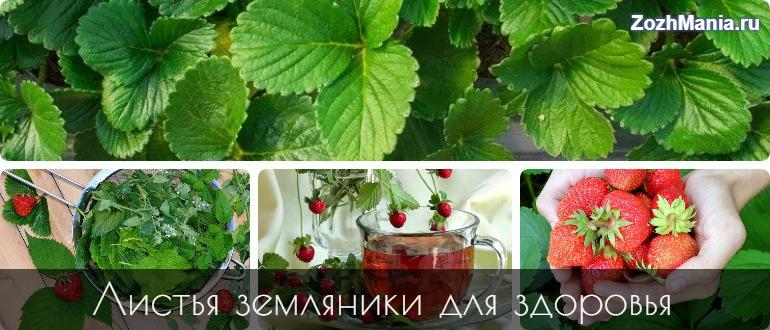 Чай Из Листьев Клубники Польза И Вред - описание