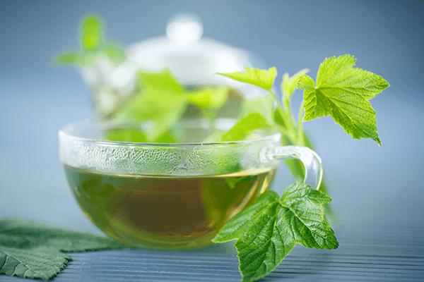 Чай Со Смородиновым Листом Польза И Вред - описание и основные характеристики