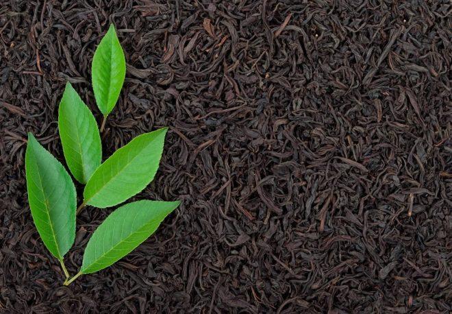 Какой Байховый Чай Имеет Терпкий Вяжущий Вкус - описание и основные характеристики