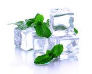 Мелисса Трава Для Чая Заготовка На Зиму - описание и основные характеристики