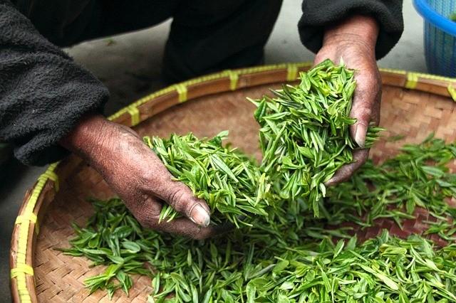 Почему Нельзя Пить Зеленый Чай На Ночь - детально о чае