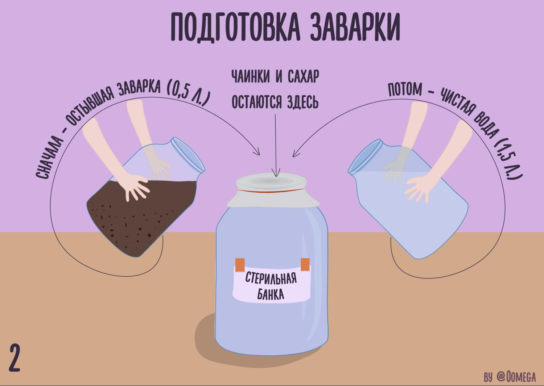 Вырастить Чайный Гриб Из Пакетиков Черного Чая - советы
