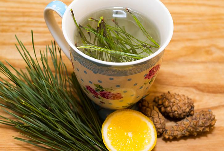Чай Из Сосновых Иголок Польза И Вред - детально о чае