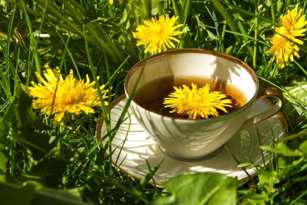 Как Заварить Чай Из Одуванчиков Свежих Цветков - основные характеристики