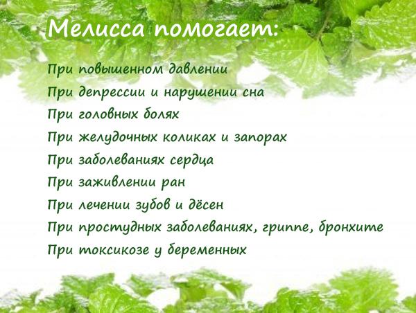 Можно Ли Чай С Мелиссой При Гв - обзор