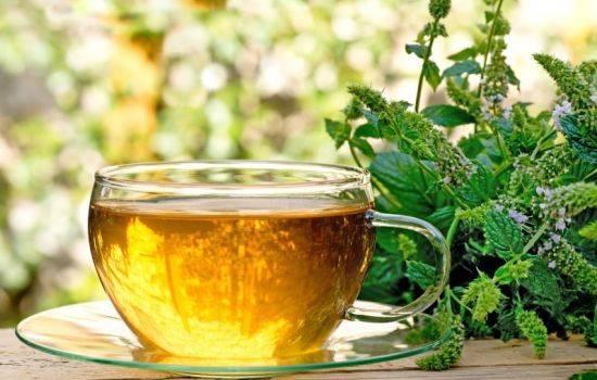 Мелисса Польза И Вред Здоровью В Чае - советы