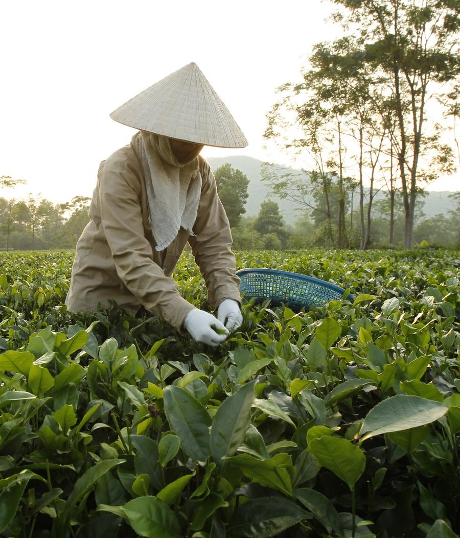 Правда Ли Что Чай В Пакетиках Вреден - детально о чае