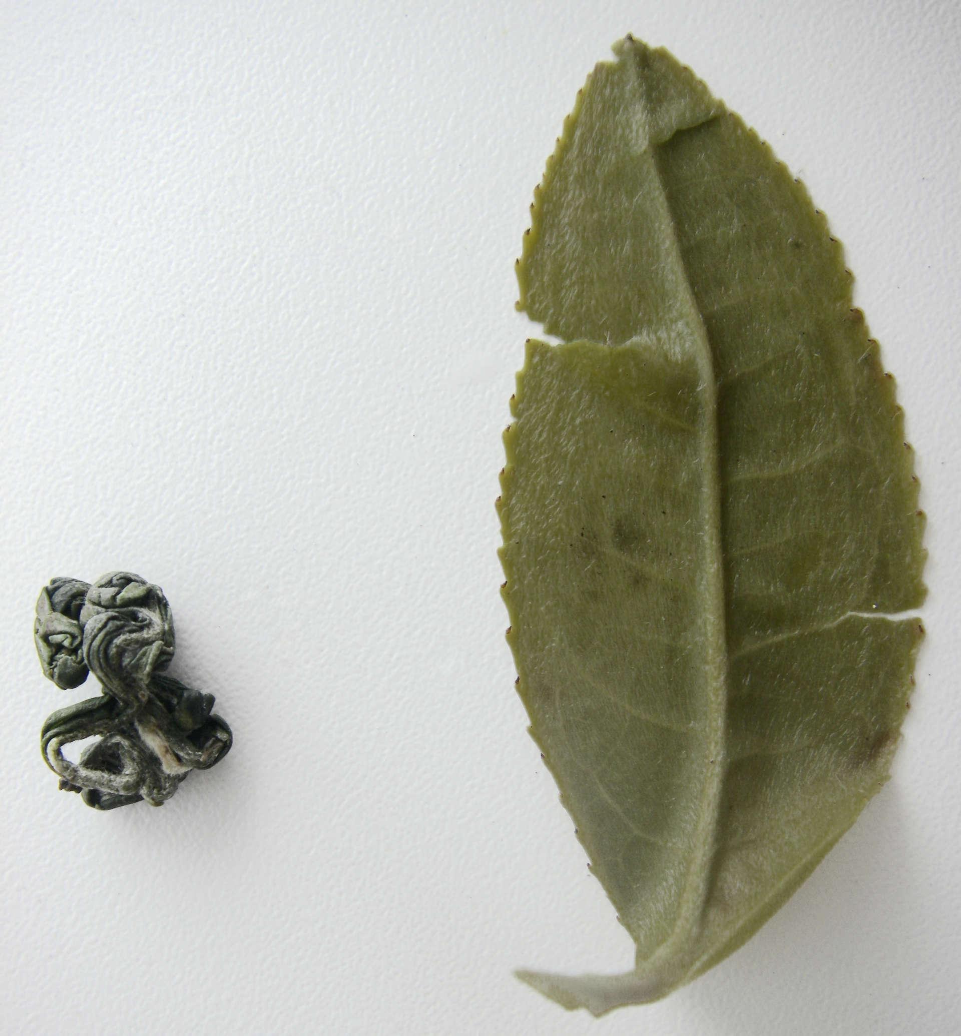 Происхождение И Значение Слова Чай Для Школьника - детально о чае