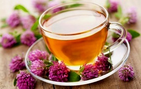 Чай Из Цветков Клевера Польза Или Вред - обзор