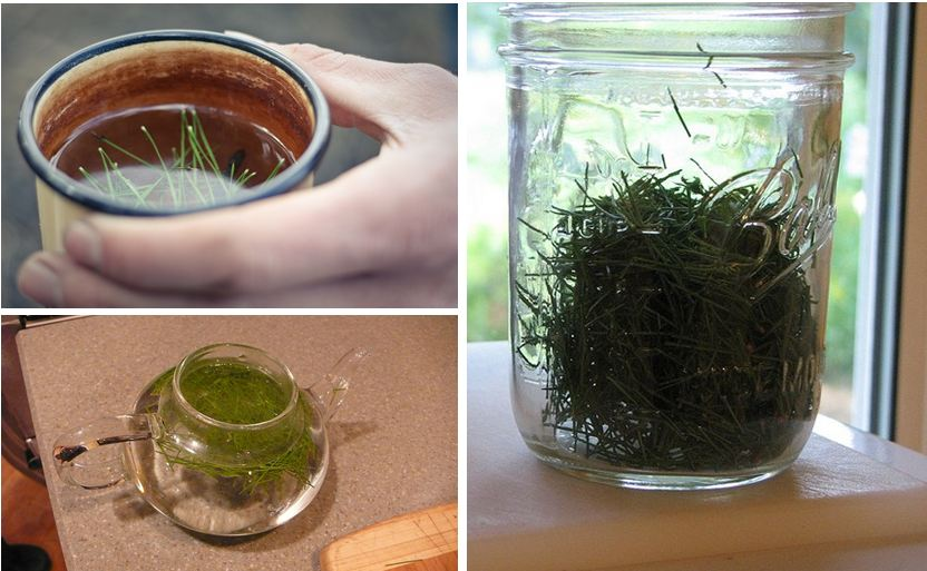 Чай Из Еловых Шишек Польза И Противопоказания - основные характеристики