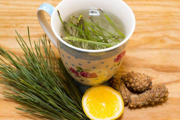 Как Правильно Заваривать Чай Из Хвойных Почек - описание