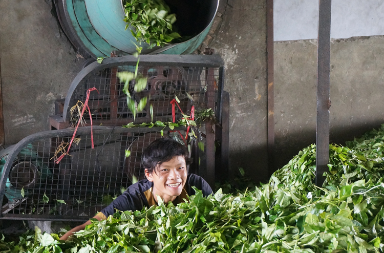 Какая Страна Региона Является Крупнейшим Производителем Чая - советы