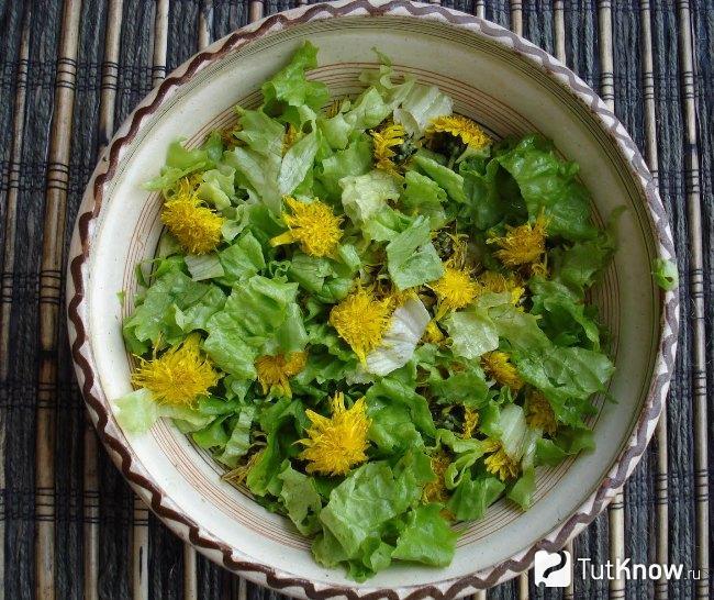 Можно Ли Заваривать Цветы Одуванчика В Чай - описание и основные характеристики