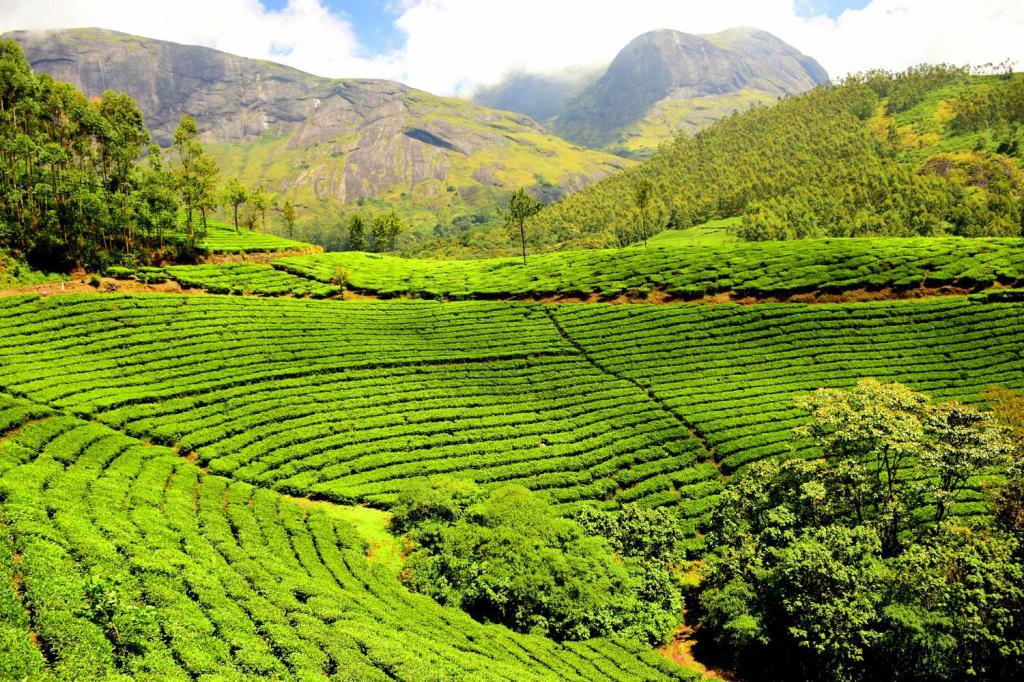 Сколько Килокалорий В Чае Без Сахара Черном - разбор вопроса